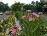 Tree plantation drive @ Kochi